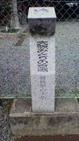 36 萱島駅の大楠