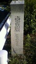 51 妙見の桜並木