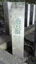 78 美多弥神社のシリブカガシの森